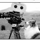 Dog Lassie with Digital video Camera. - 8x10 photo