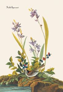 Field Sparrow - 16x24 Giclee Fine Art Print Framed In Black (20x30 Finished)