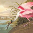 Roseate Spoonbill - 16x24 Giclee Fine Art Print Framed In Gold (20x30 Finished)