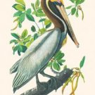 Brown Pelican - 16x24 Giclee Fine Art Print Framed In Gold (20x30 Finished)