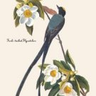 Fork-Tailed Flycatcher - 16x24 Giclee Fine Art Print Framed In Gold (20x30 Finished)