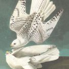 White Gyrfalcon - 16x24 Giclee Fine Art Print Framed In Gold (20x30 Finished)