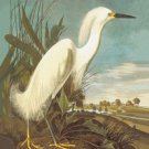 Snowy Egret - 16x24 Giclee Fine Art Print Framed In Gold (20x30 Finished)