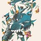 Blue Jay - 16x24 Giclee Fine Art Print Framed In Black (20x30 Finished)