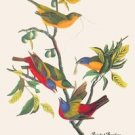 Painted Bunting - 16x24 Giclee Fine Art Print Framed In Gold (20x30 Finished)