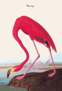 Flamingo - Paper Poster (18.75 X 28.5)