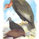Condor,  Buzzard, And Crow - 16x24 Giclee Fine Art Print Framed In Black (20x30 Finished)