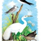 Great White Egret (white Heron) - 16x24 Giclee Fine Art Print Framed In Gold (20x30 Finished)