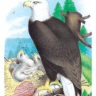 Bald Eagle (white-Headed Eagle) - Paper Poster (18.75 X 28.5)