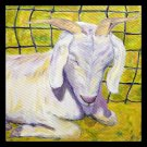 Sweet Albie - giclee print of original oil painting