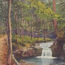 CH09.Vintage Swiss Postcard. View of stream in woodland.