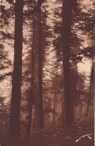 CJ52.Vintage French Postcard. The Forest around Luchon, Superbagneres.France