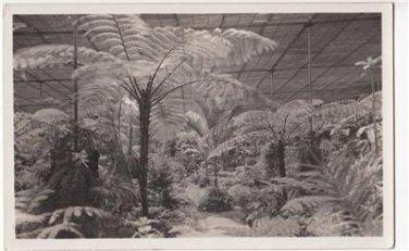 CM22.Vintage Portuguese Postcard. Estufa Fria. Cold Greenhouse. Lisbon.