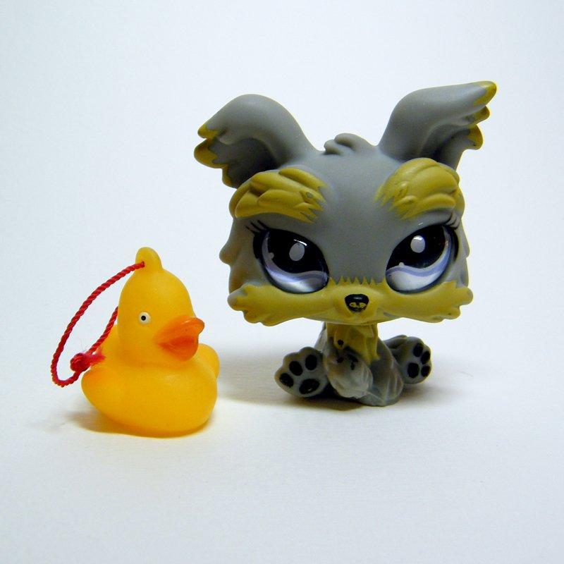 "Littlest Pet Shop # 883 YORKSHIRE TERRIER Grey Yorkie w Big ""Glass"" Eyes"