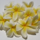 Natural Plumeria Vanilla Scented Soy & Shea Butter Body Lotion 16 Oz