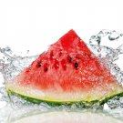Natural Watermelon Soy & Shea Butter Body Lotion 16 Oz