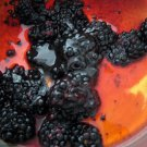 All Natural Honey Blackberry Scented Shampoo 16 Oz