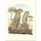 """Alan Carman - """"Cheetahs"""" Limited Edition Lithograph"""