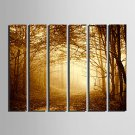 E-HOME Stretched Canvas Art Woods In The Mist Decoration Painting  Set Of 6