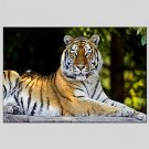 Oil Painting Tiger Style  Canvas Material with Stretched Frame Ready To Hang SIZE60*90CM.
