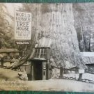 WORLD FAMOUS TREEHOUSE-LILLEY REDWOOD PARK, CAL-VINTAGE RPPC REAL PHOTO POSTCARD