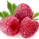 Ambrosial Raspberry Essential Oil 100% Pure Organic Natural Uncut 10ml - 1000ml
