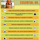 Ambrosial Pine Essential Oil 100% Pure Organic Natural