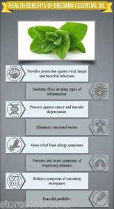 Ambrosial Oregano Essential Oil Pure Natural Organic 10ml to 1000ml