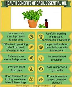 Ambrosial Basil Essential Oil Pure Natural Organic Uncut Undiluted