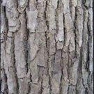 Ambrosial Ho Wood / Ravintsara Essential Oil (Cinnamomum camphora) 100% Natural