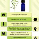 Ambrosial Tarragon Oil 100% Pure Organic Natural Uncut Undiluted 10ml to 1000ml
