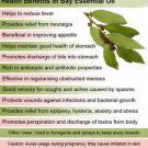 Ambrosial Bay Leaf Essential Oil Pure Natural Organic  10ml to 1000ml