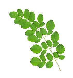 Ambrosial Moringa Oil (Moringa oleifera) 100% Natural Organic 10ml to 1000ml