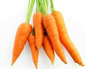 Ambrosial Carrot Seed Essential Oil 100% Pure Organic Natural 10ml to 1000ml