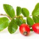 Ambrosial Rose Hip Essential Oil 100% Pure Organic Natural Uncut 10ml - 1000ml