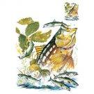 Fishing Tee Shirt