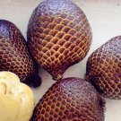 Super 20 Seeds Snake Fruit Bonsai Healthy Delicious Miracle Fruit Buah Salak