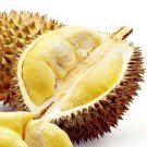 Super 2 Seeds Buah Durian Bonsai Delicious King Of Fruit Plant Strong Aroma
