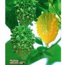 Super 6 Seeds Momordica Charantia Bitter Gourd Balsam Cucumber Small Pare