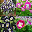 Super Sale 200 Seeds Mix Torenia Fournieri Plant Wishbone Flower Garden
