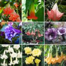 Super 30 Seeds Datura Plants Herbs Trumpet Flower Mixed Garden Decor