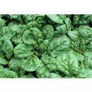 Super Sale 350 Seeds Heirloom Bloomsdales Spinach Long Standing Non GMO