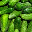 Super 50 Seeds Wisconsin SMR 58 Pickling Cucumber Non-GMO Healthy