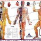 Acupressure Sujok Meridianology Chart Quick Study Educational Academics Teaching