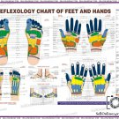 New Reflexology Chart In English Quick Study Academics Educational Teaching