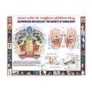 Hindi Language New Reflexology Chart Study Academics Teaching Educational