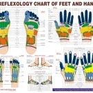 New English Language Reflexology Chart - Study Academics Teaching