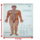Set Of 3 Acupuncture Points Chart Meridians - Educational Very Useful Chart