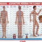 Meridian Panch Tatvha Five Element Chart-Study Academics Teaching Educational