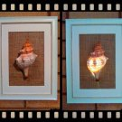 Handmade Real Seashell Frame Lamp with Free Delivery (Pleuroploca Trapezium)